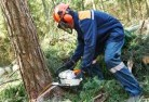 Adare Tree felling services 21