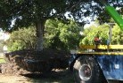 Adare Tree felling services 4